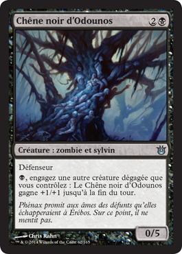 Chêne noir d'Odounos