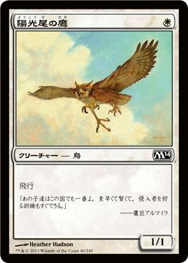 陽光尾の鷹