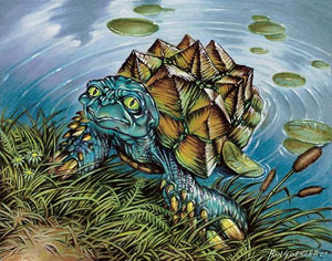 Turtleshell_Changeling