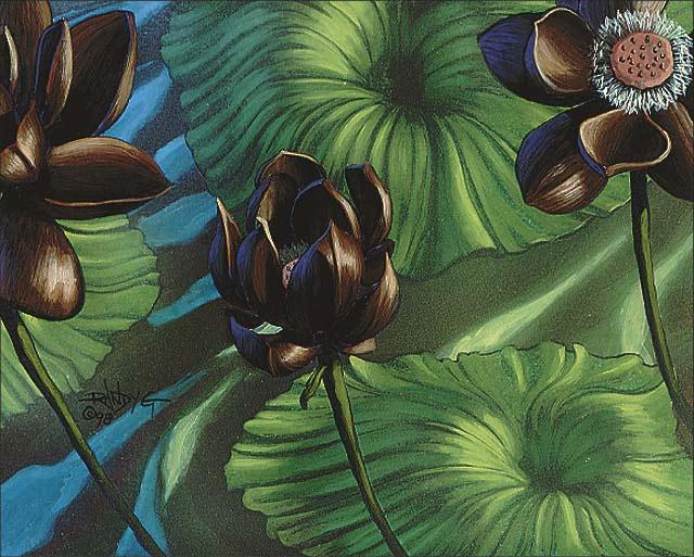Lotus_Blossom_640