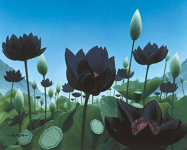 Lotus_Vale_640