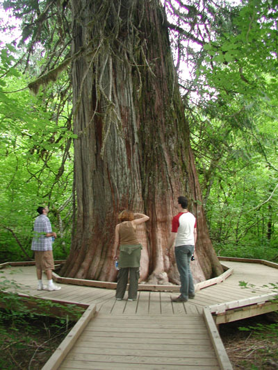 Magic artists and a giant Douglas fir