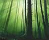 Forest thumbnail